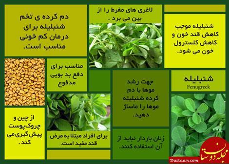 www.dustaan.com خواص و مضرات شنبلیله / از تقویت مو تا کاهش چربی خون