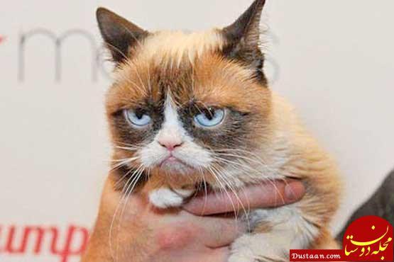 www.dustaan.com دادگاه کالیفرنیا 500 هزار پوند به گربه اخمالو داد! +عکس
