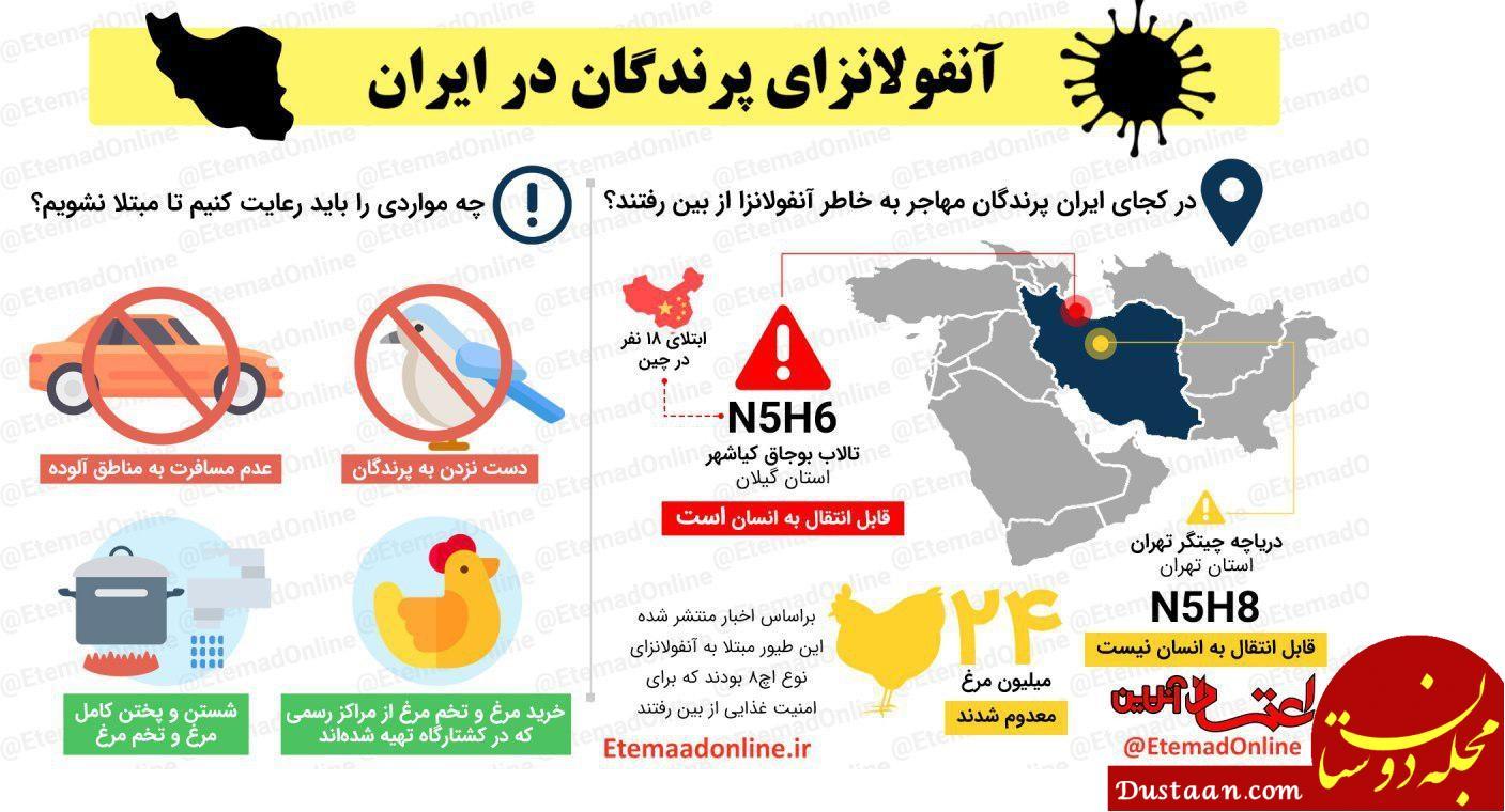 www.dustaan.com آنفولانزای پرندگان در ایران +اینفوگرافیک