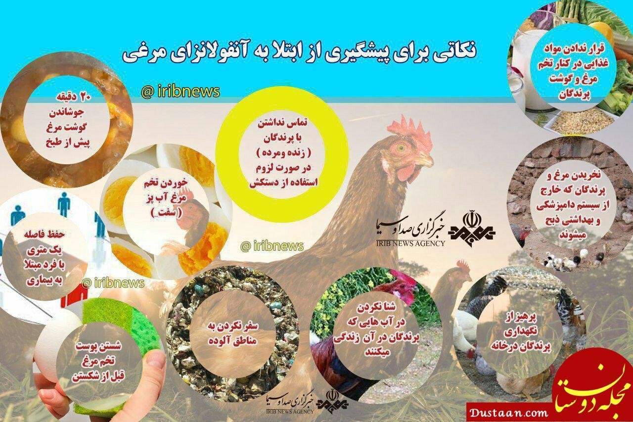 www.dustaan.com برای پیشگیری از ابتلا به آنفولانزای مرغی چه کنیم؟ +اینفوگرافیک