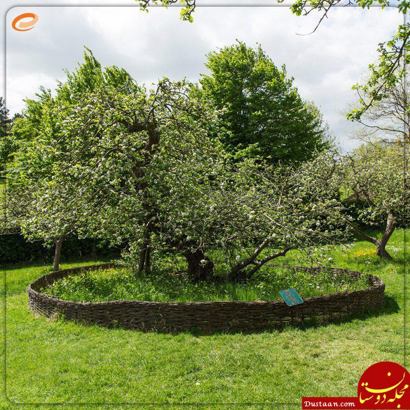 www.dustaan.com درخت سیب نیوتن کجای دنیا قرار دارد؟!