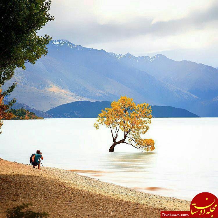 www.dustaan.com دریاچه ای که تنها یک درخت دارد! +عکس