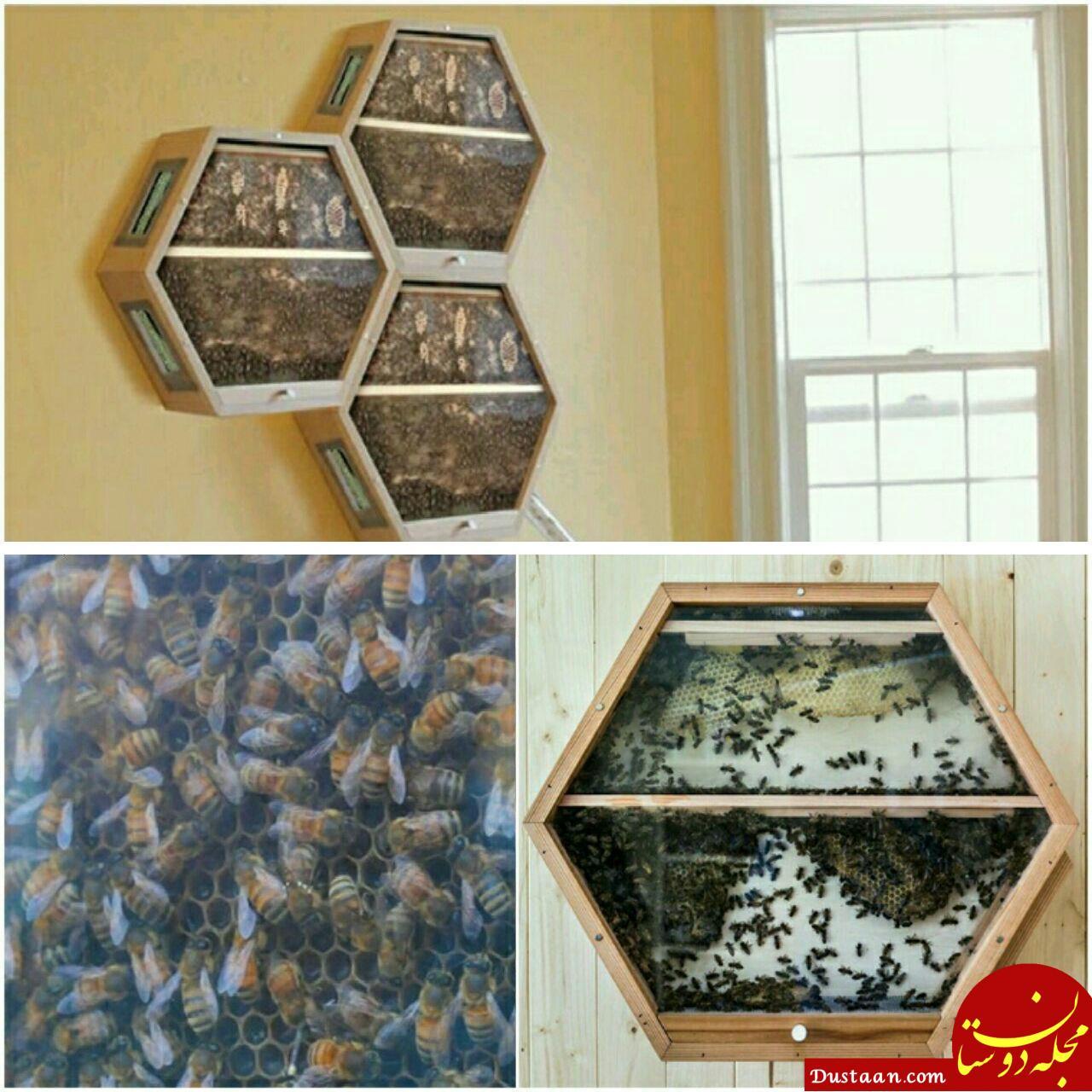 www.dustaan.com روشی جدید برای پرورش زنبور عسل در خانه! +عکس