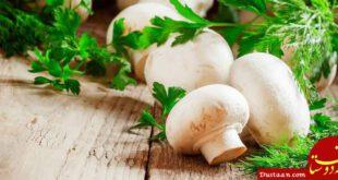 خواص و فواید قارچ از نظر طب سنتی