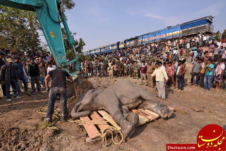www.dustaan.com کشته شدن 4 فیل در برخورد شدید با قطار  +تصاویر