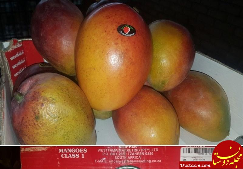 www.dustaan.com جمع آوری شبانه میوههای قاچاق میدان مرکزی میوه تهران + تصایر