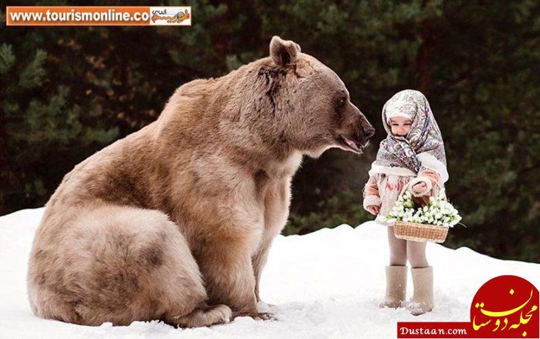 www.dustaan.com این خرس 300 کیلویی عاشق تماشای تلویزیون است! +تصاویر