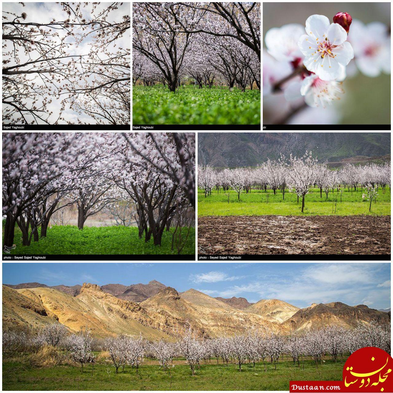 www.dustaan.com تصاویری دیدنی از طبیعت بسیار زیبای اردبیل