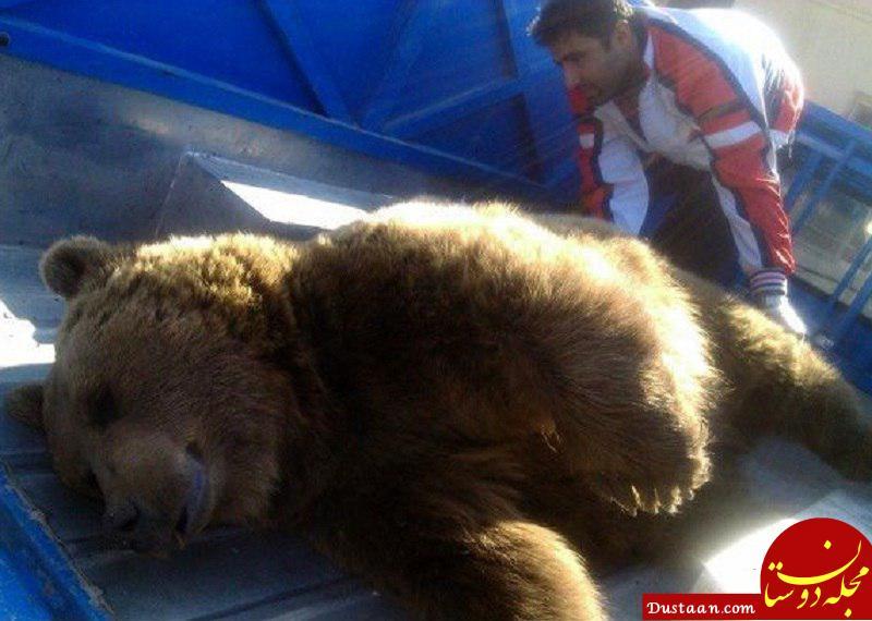 www.dustaan.com یک خرس در برخورد با قطار در شیراز تلف شد +عکس