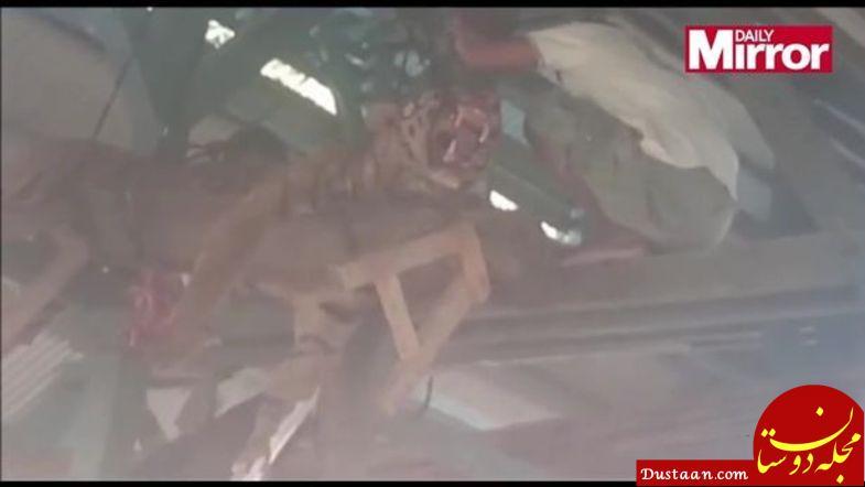 www.dustaan.com قتل عام ببر سوماترایی با شلیک ۱۳۰ گلوله! +عکس