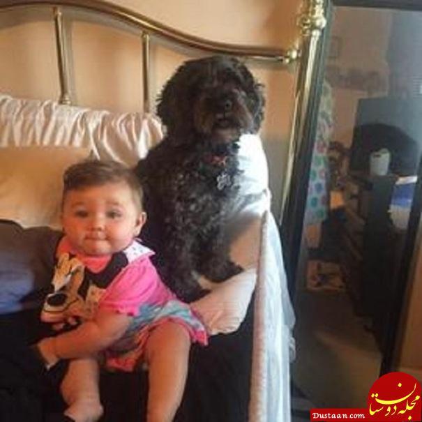 سگ باوفایی که در آتش سوخت تا صاحبش زنده بماند! +تصاویر