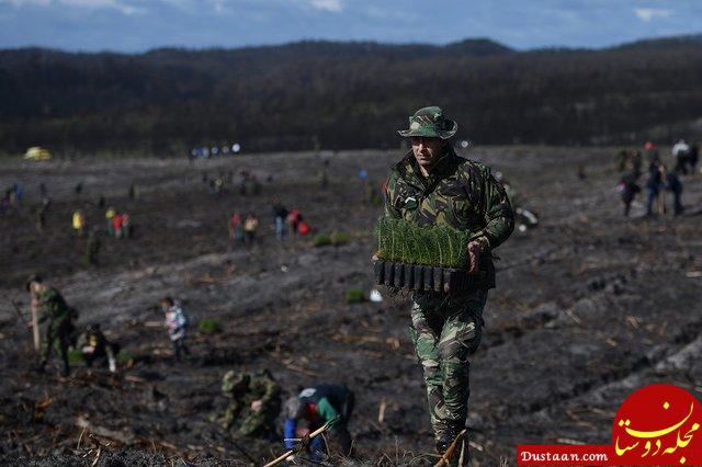 www.dustaan.com کاشت هزاران اصله درخت در جنگل های سوخته پرتغال +عکس
