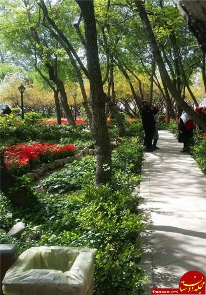 تا می توانید در این باغ سلفی بگیرید! +تصاویر