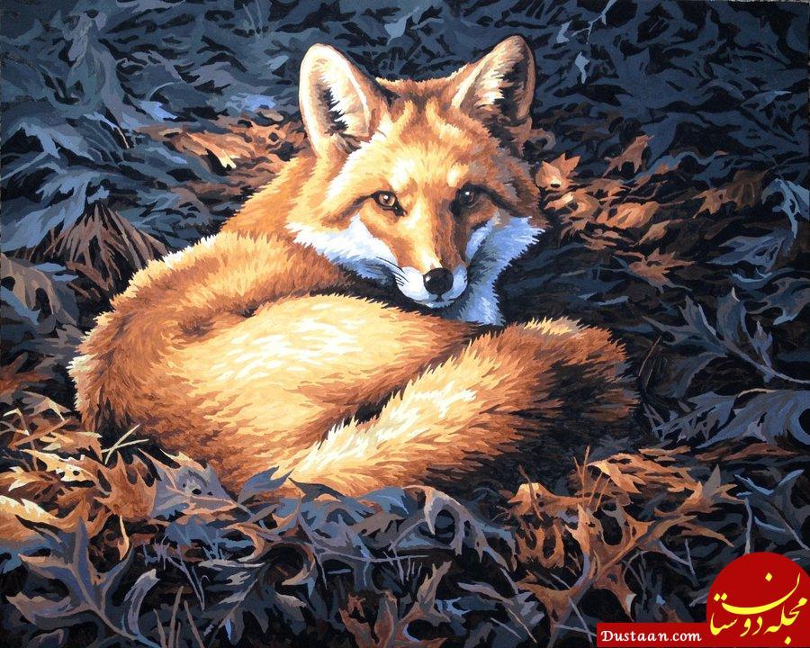 https://img00.deviantart.net/776f/i/2012/187/6/4/forest_fox_by_jiayin5-d568v4q.jpg