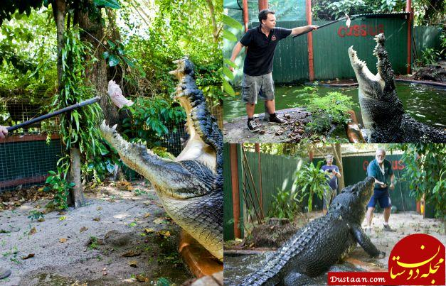 Largest crocodile in captivity (living)