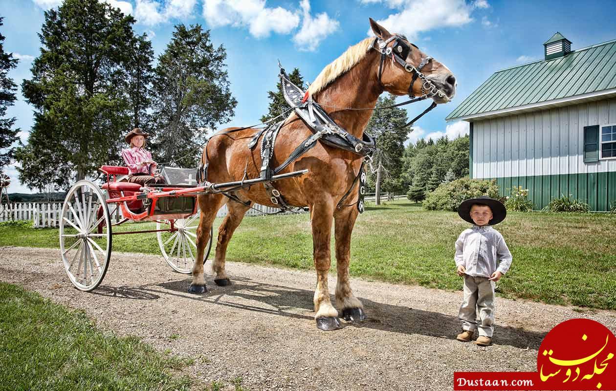 Tallest horse living