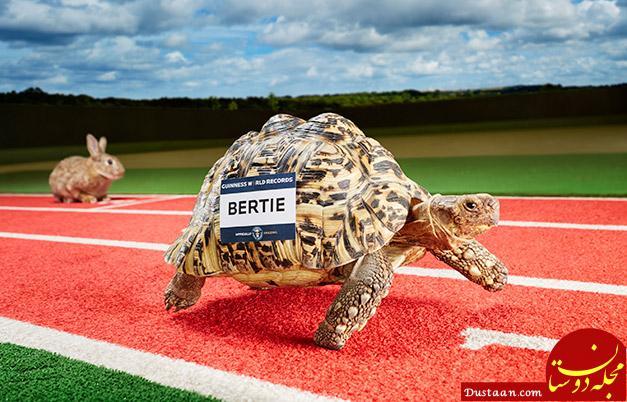 Fastest tortoise
