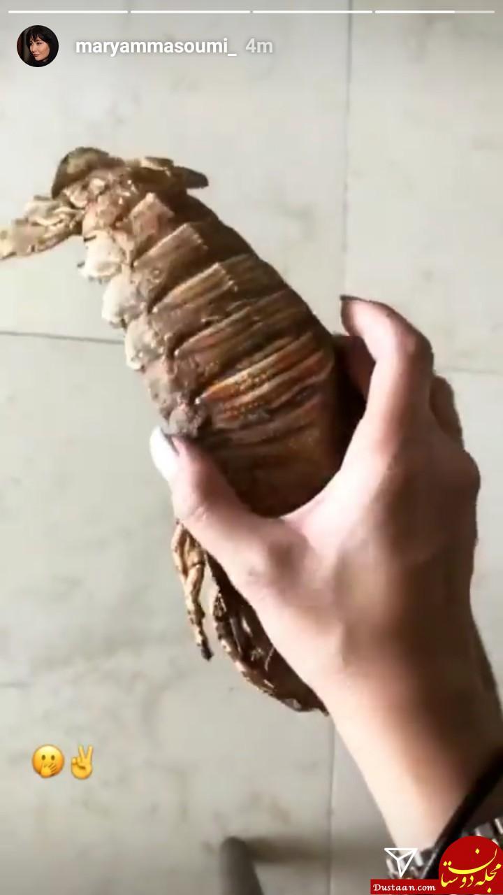 www.dustaan.com یک حیوان خانگی عجیب مریم معصومی! +عکس