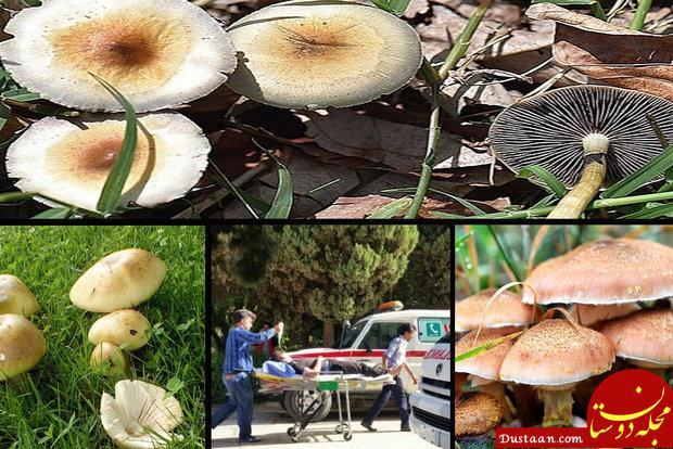 www.dustaan.com پادزهری برای قارچ های سمی وجود ندارد/فقط ۶ درصد قارچ ها خوراکی است