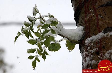 www.dustaan.com برف در هفتاد و دومین روز بهار، کلاردشت را سفیدپوش کرد!