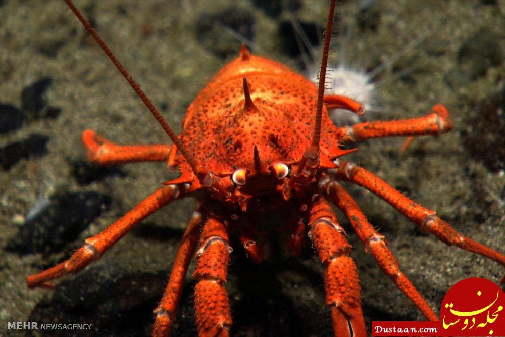 www.dustaan.com تصاویری خارق العاده از موجودات اعماق دریا