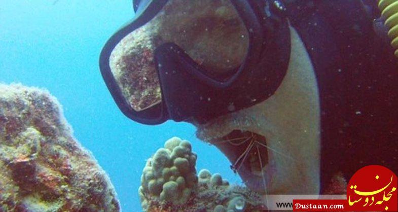 www.dustaan.com پاکسازی دهان یک غواص با میگو زنده! +تصاویر