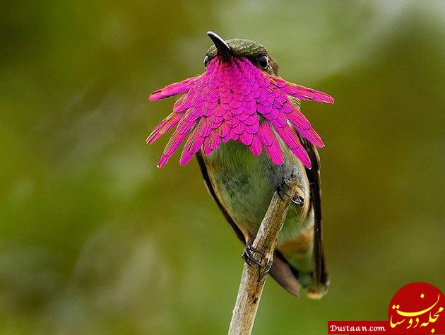 اخبار,اخبارگوناگون, تصاویری ناب از زیباترین پرندگان