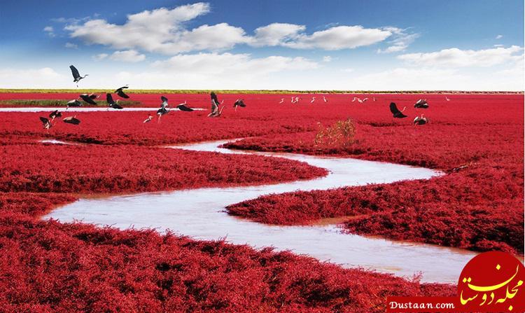 www.dustaan.com جاده هایی زیبا با چشم اندازهایی رویایی +تصاویر