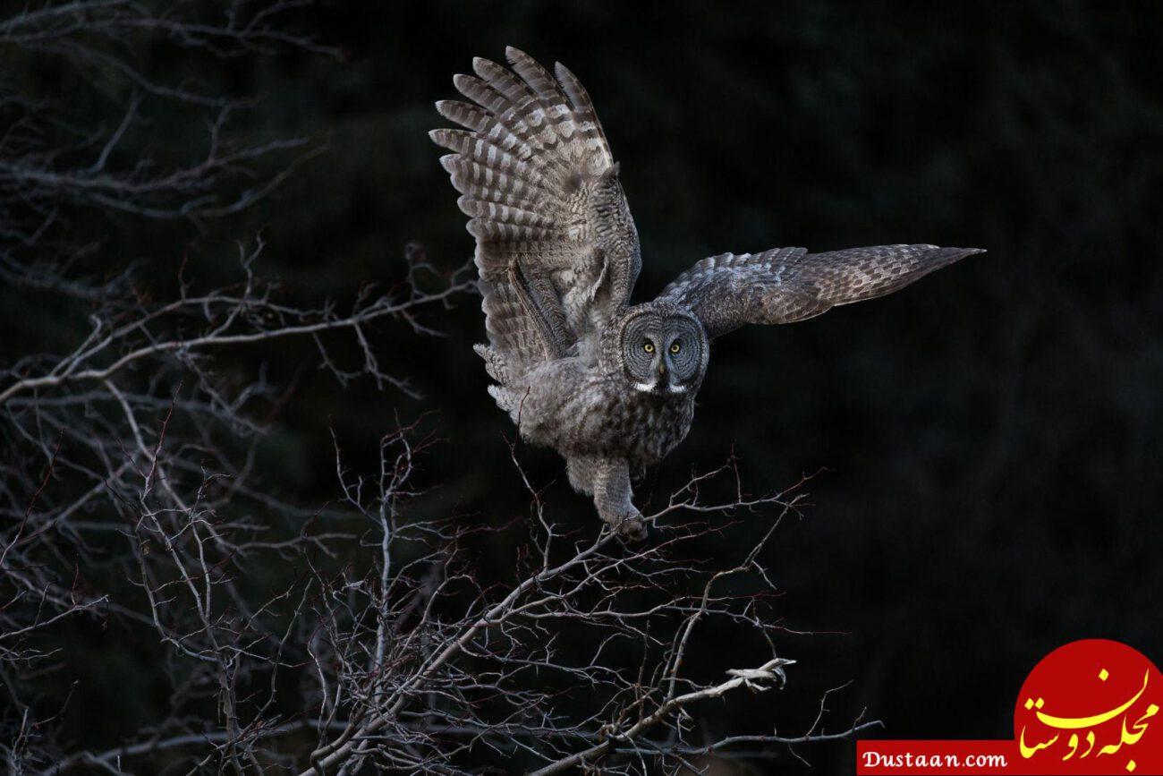 www.dustaan.com عکس های فوق العاده زیبا ار دنیای پرندگان +تصاویر