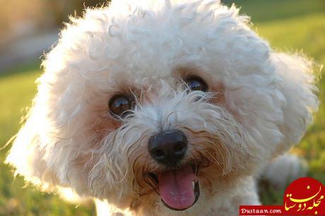 www.dustaan.com فروش سگ های تزئینی با قیمت نجومی در نمایشگاه بین المللی مشهد!