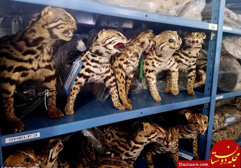 www.dustaan.com انبار مخوف حیات وحش در کلرادو آمریکا +عکس