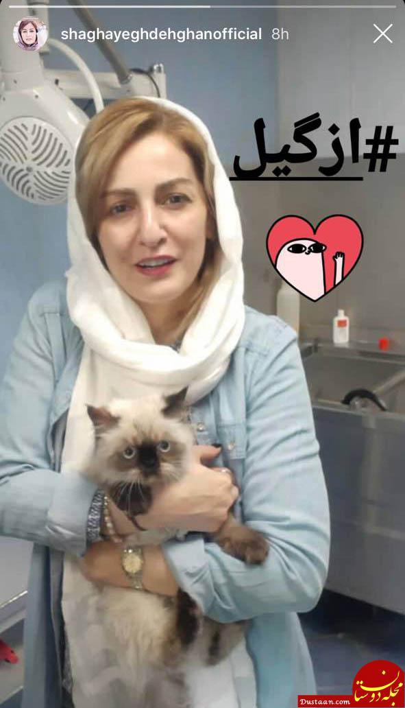 www.dustaan.com حیوان خانگی «شقایق دهقان»! +عکس