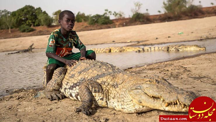 www.dustaan.com دوستی عجیب یک پسر بچه با تمساح غول پیکر! +عکس