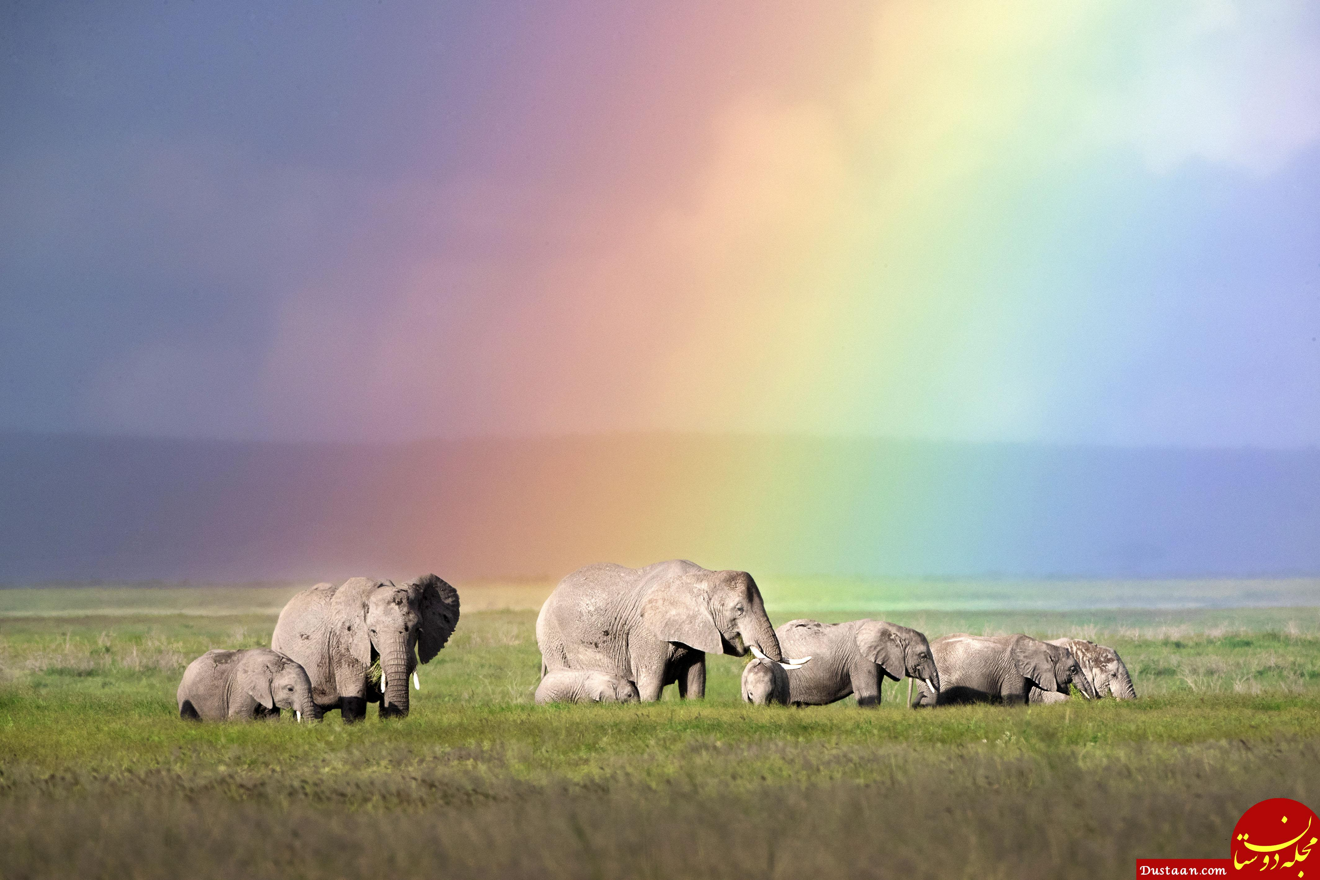 https://www.catersnews.com/wp-content/uploads/2018/07/0_CATERS_elephants_and_rainbows_001.jpg