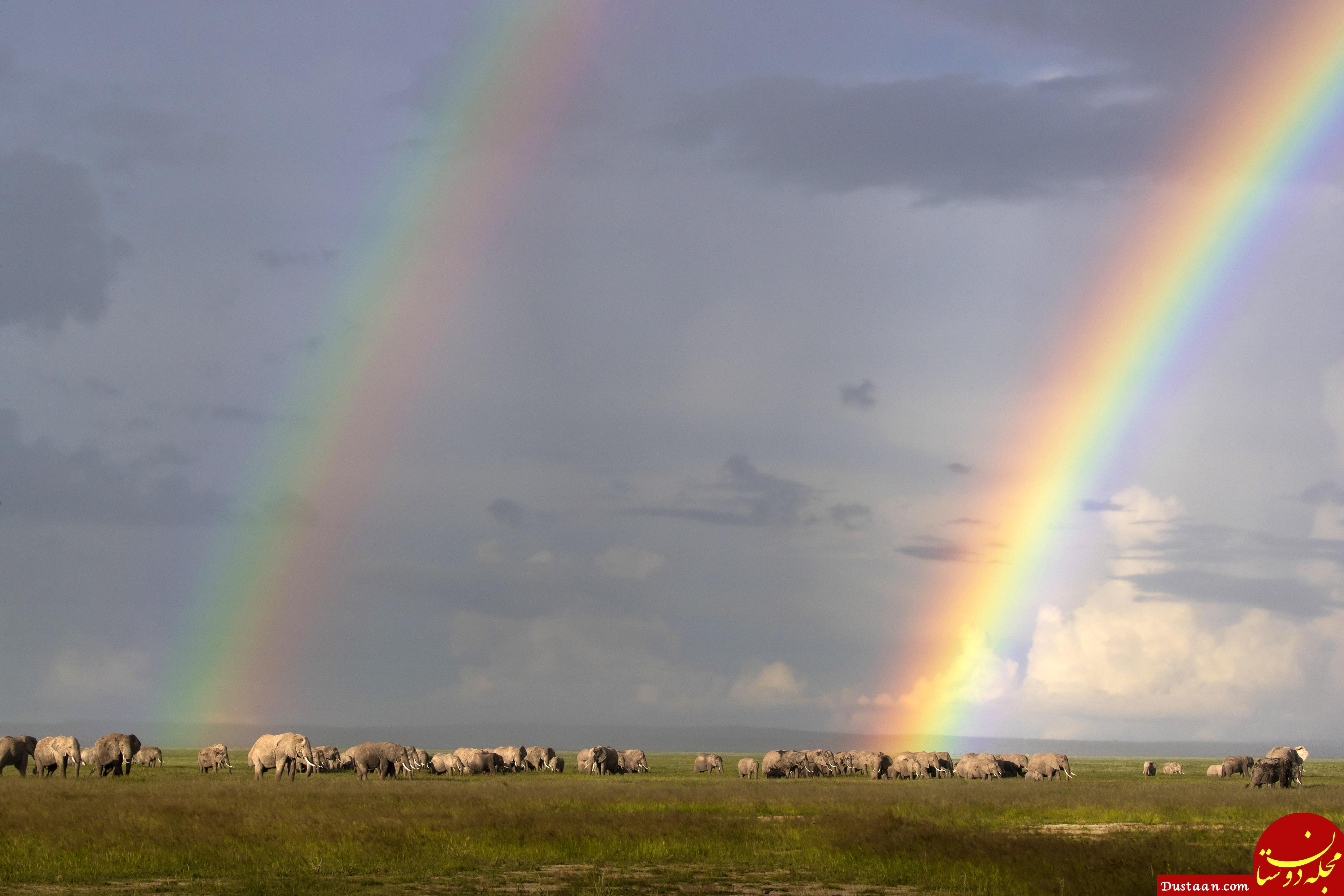 https://www.catersnews.com/wp-content/uploads/2018/07/1_CATERS_elephants_and_rainbows_002.jpg