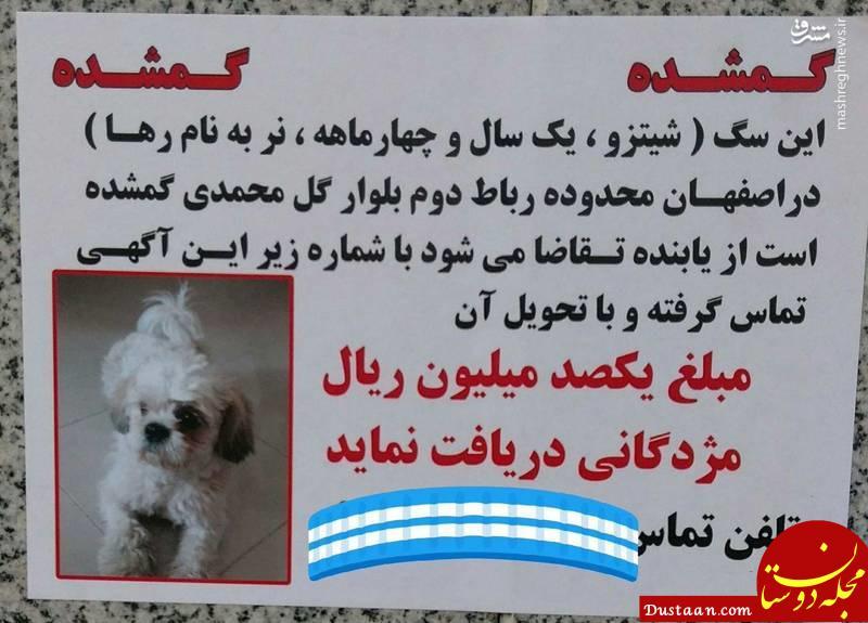www.dustaan.com 10 میلیون مژدگانی برای پیدا کردن سگ خانگی! +عکس