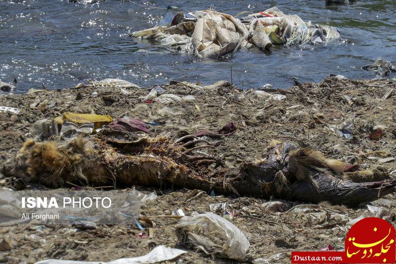 www.dustaan.com کاشت «سرطان» در ساوه! +تصاویر