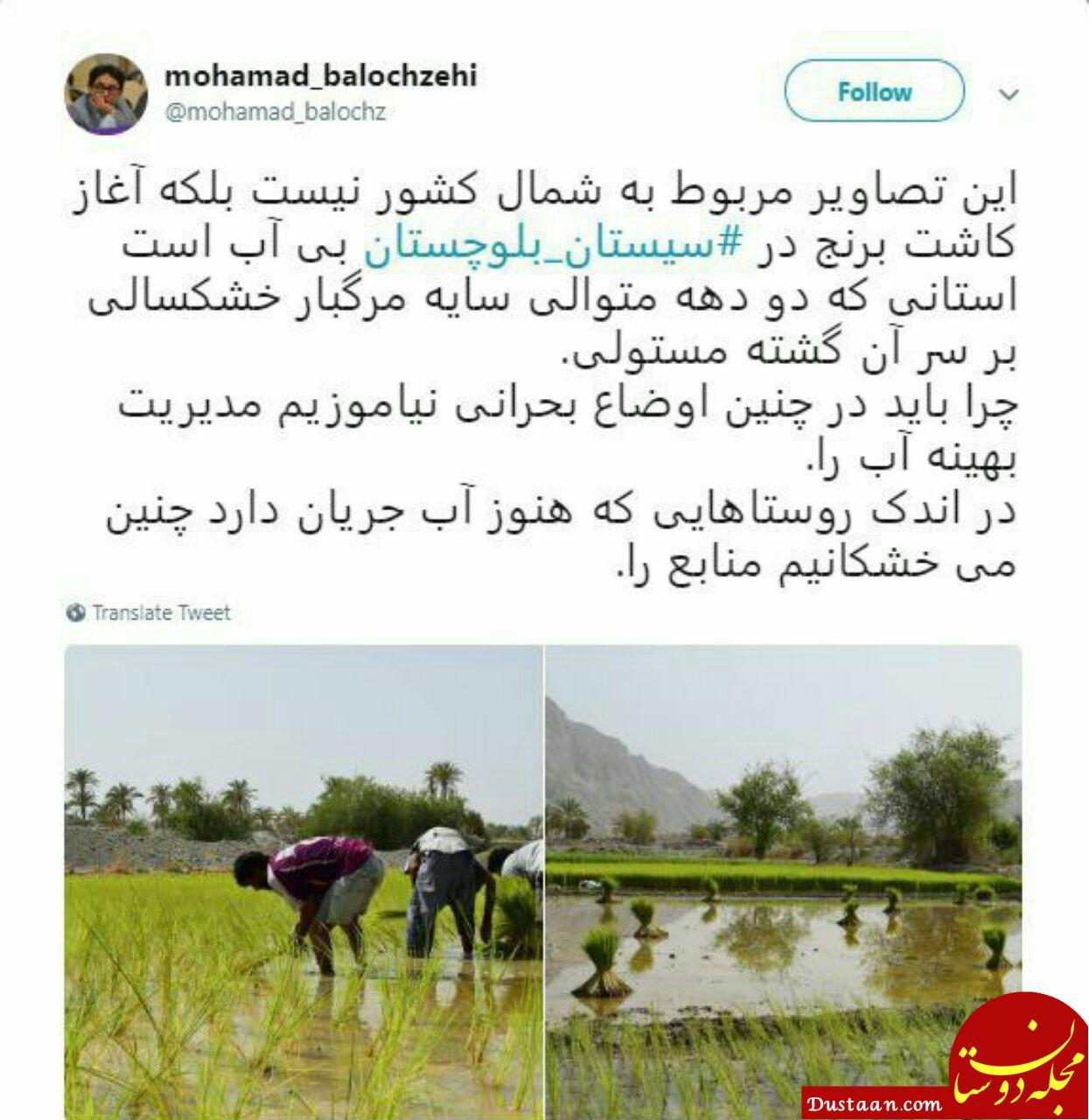 www.dustaan.com کاشت برنج در سیستان و بلوچستان بی آب! +عکس