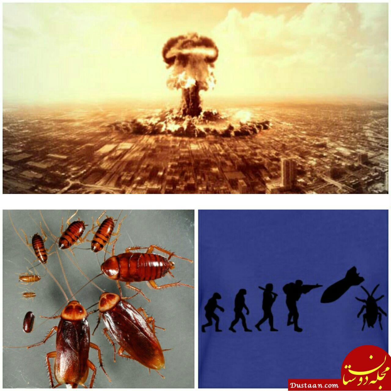 www.dustaan.com تنها موجودی که پس از انفجار بمب اتم زنده می ماند! +عکس
