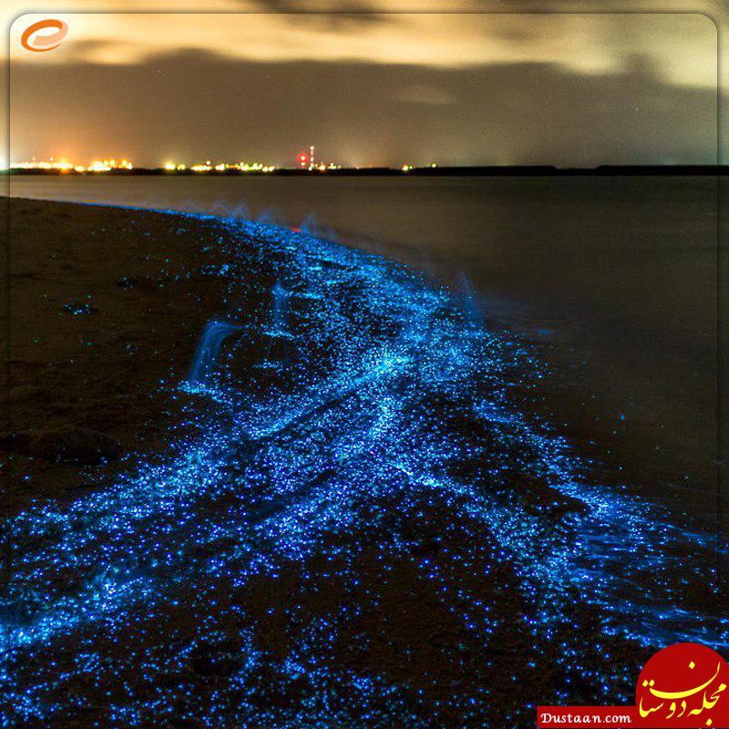 تاکنون چیزی درباره ساحل ستاره های ایران شنیده اید؟! +عکس