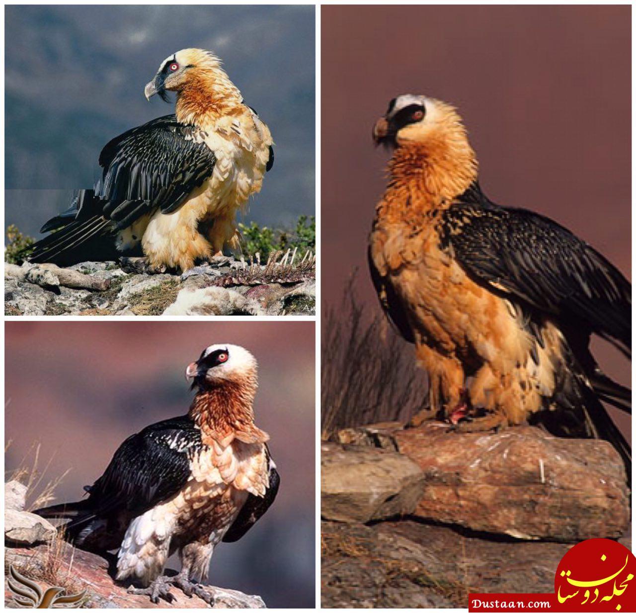 www.dustaan.com مرغ سعادت از نمایی نزدیک! +عکس