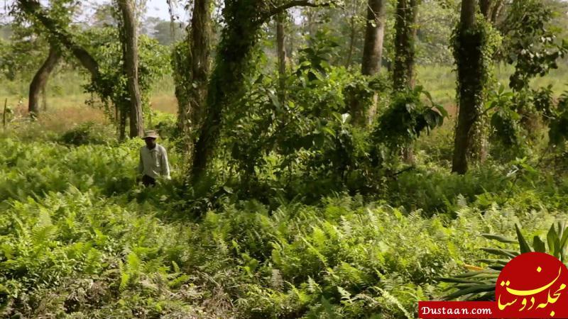 www.dustaan.com این مرد با پشتکار خود یک بیابان خشک را به جنگل تبدیل کرد! +تصاویر