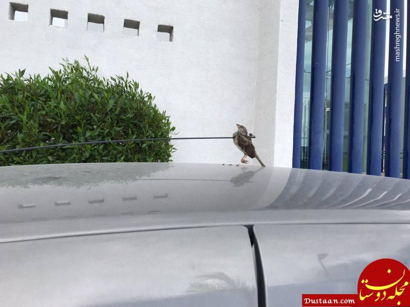 www.dustaan.com پرواز آخر! +تصاویر