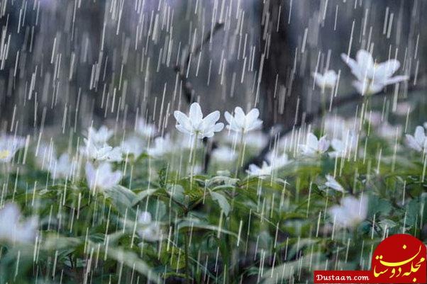 www.dustaan.com تداوم بارش باران در استان های ساحلی خزر /بارش باران و باد و گرد و غبار در شرق کشور