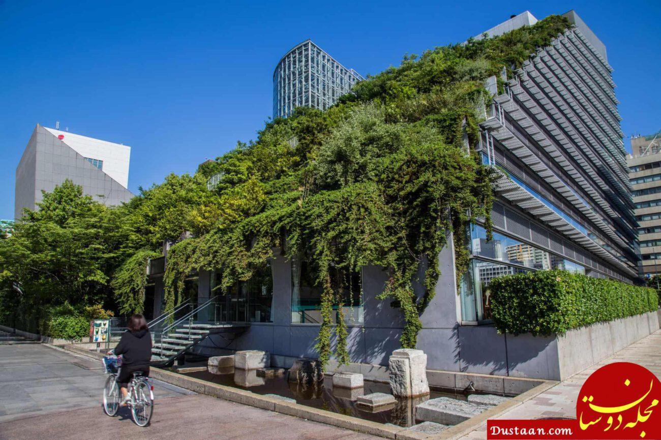 www.dustaan.com باغ های پشت بامی در فضای مدرن شهری +عکس ها
