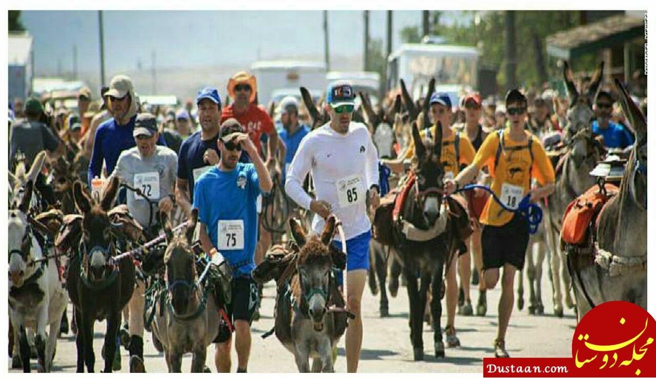 www.dustaan.com مسابقه الاغ دوانی در کلرادوی آمریکا ! +عکس