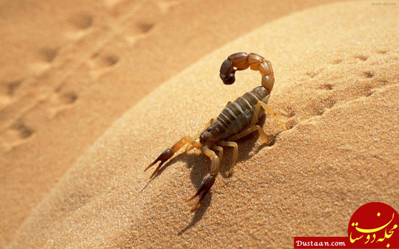 http://media.sarpoosh.com/images/article/picture/sting-scorpion-snake970611.jpg