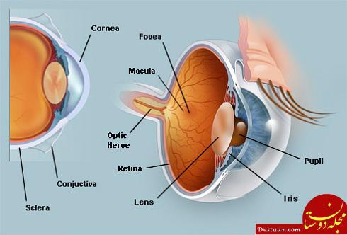 چشم,آناتومی چشم