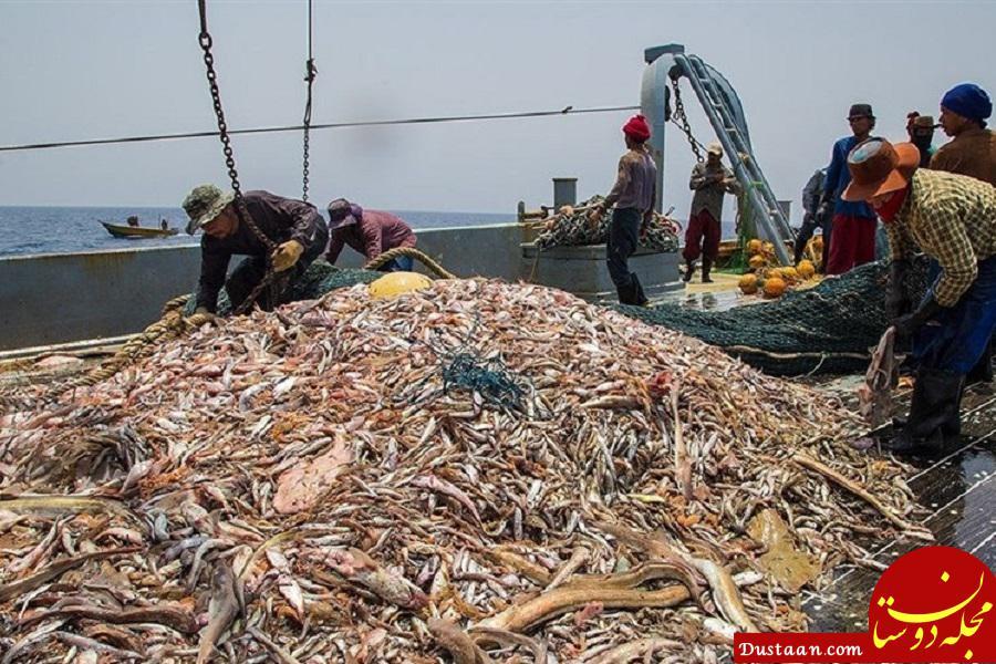 www.dustaan.com چین: کشتیهای ماهیگیری ما در آب های ایران حضور ندارند / قراردادی هم در این زمینه نداریم