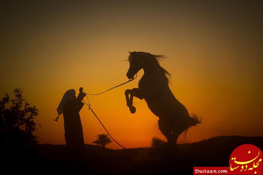 www.dustaan.com این عکس ها شما را شیفته مصر می کند! +تصاویر